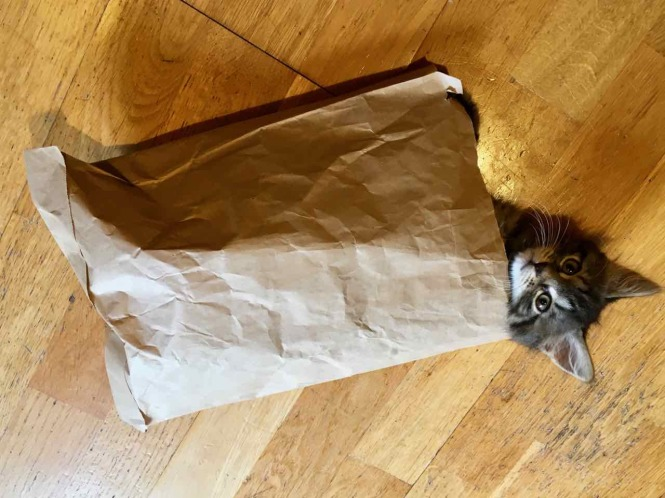 Purrcules Mulligan in a bag