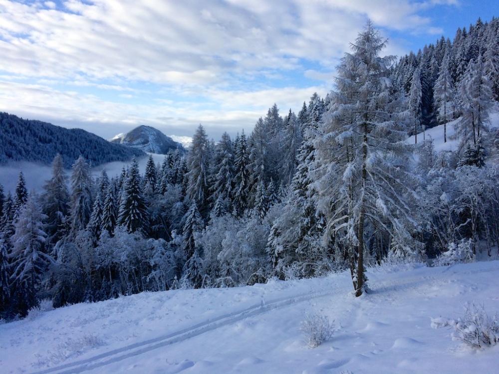 Trentino 19