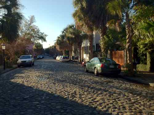 cobblestones and palm trees in Charleston