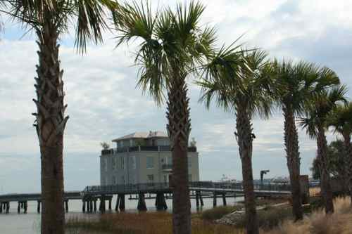 palm trees along the coast in Charleston